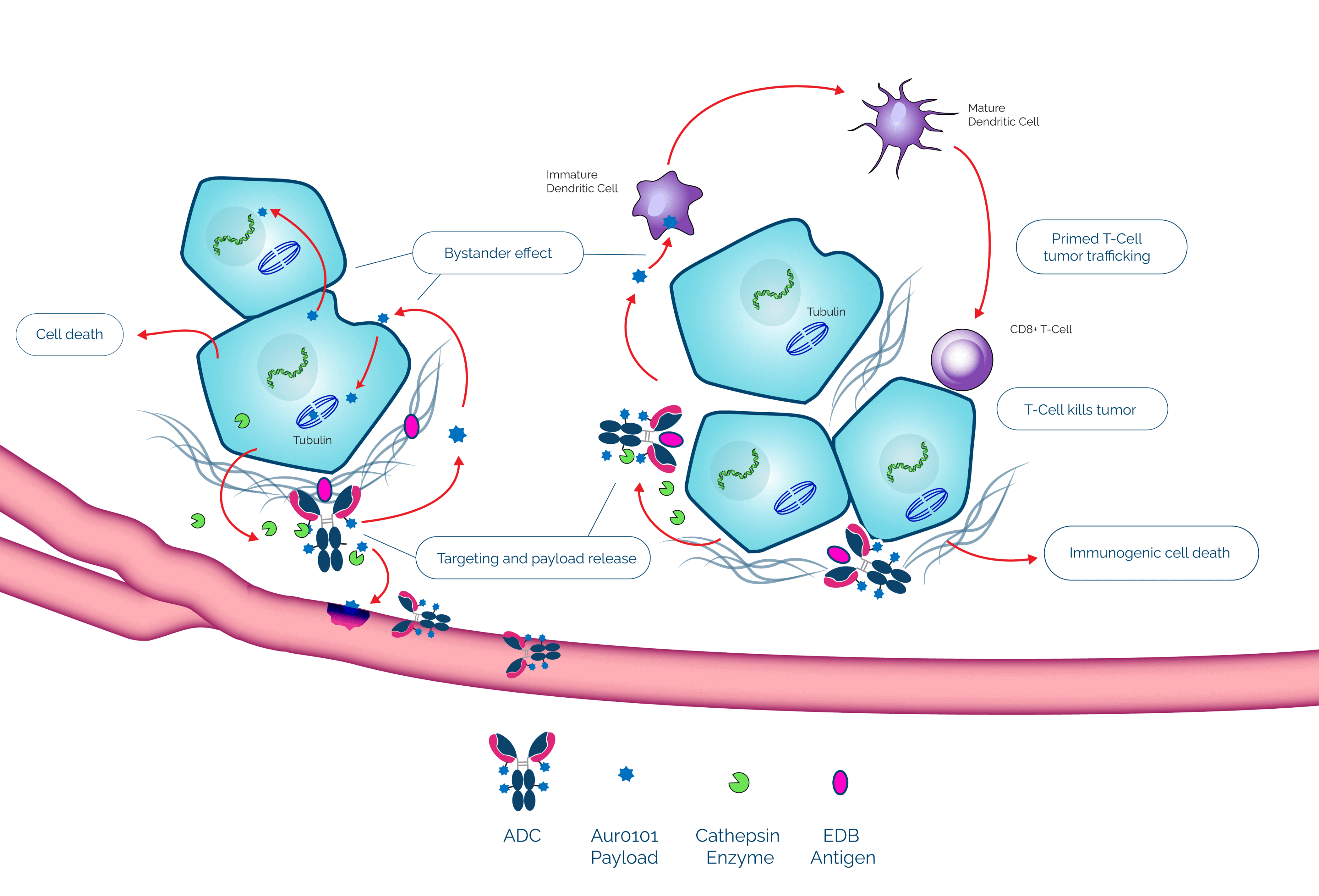 PYX-201: a promising ADC for the treatment of solid tumor