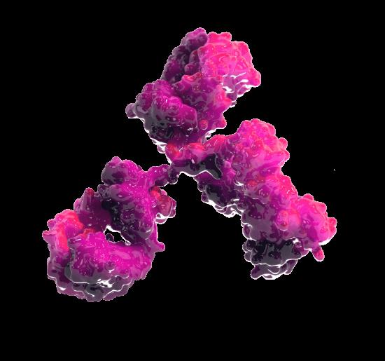 immuno cell